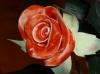 rose in ceramica