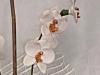 orchidee composizione