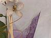 orchidea in composizione viola