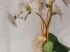 orchidea composizione