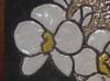 gioia-fiorita-2011