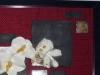 pannello-con-orchidee-su-vetro-2011